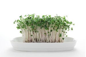 broccoli-sprouts-product