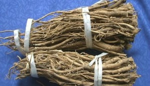 astragalus kořen