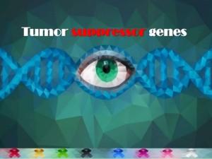 tumour-suppressor-genes
